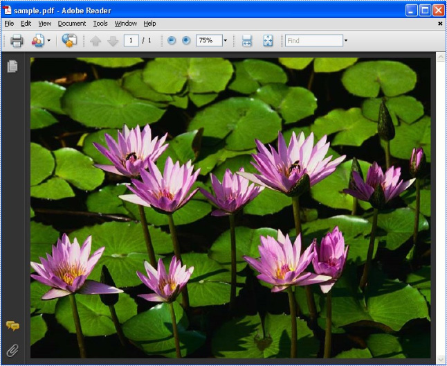 Draw image in pdf with same size